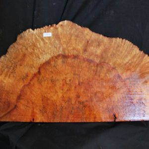 Burls Madrone Burl 24″