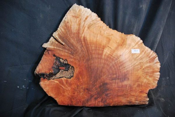 Burls Madrone Burl 16″
