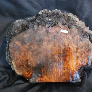 Burls Madrone Burl 14.5″