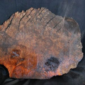 Madrone Burl 14.5″
