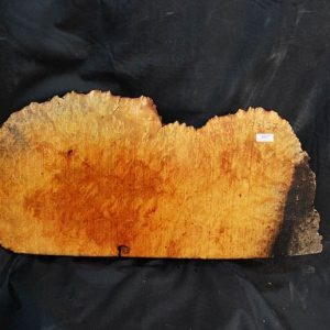 Madrone Burl 23″
