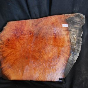 Madrone Burl 18.5″