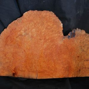 Burls Madrone Burl 21″