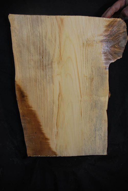 Burls Box Elder Cluster Burl 22.5″