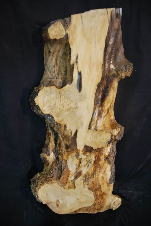 Burls Box Elder Burl 32″