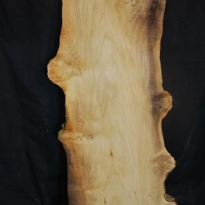 Box Elder Cluster  Burl 32″