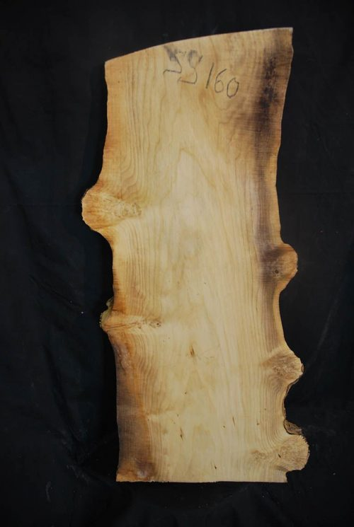 Burls Box Elder Cluster  Burl 32″