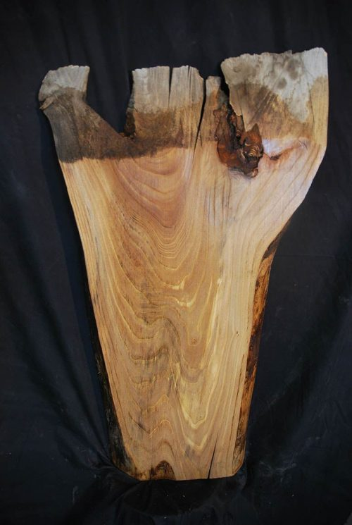 Slabs under 5 Ft Elm Slab 36″ x 16″