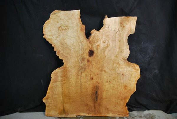 Slabs under 5 Ft Maple Slab 34.5″
