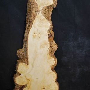 Box Elder Cluster Burl 41″