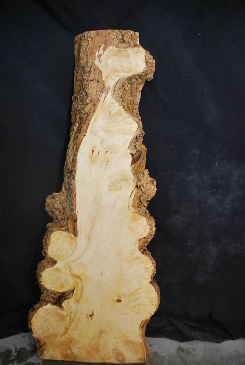 Burls Box Elder Cluster Burl 41″