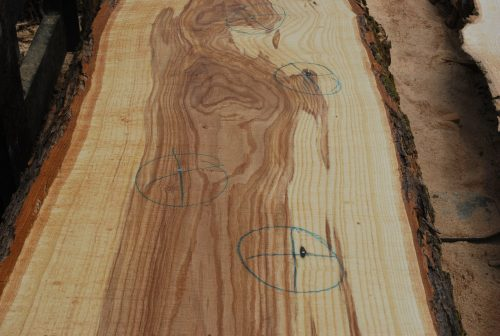 Slabs over 5 Ft Ash Slab 128″ x 29″
