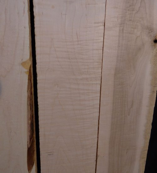 Eastern Red Curly Maple – Pack 101