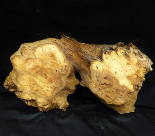 "Elm ""Twin"" Burl Slab 15″"