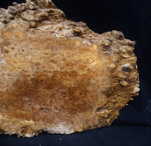 Maple Burl Slab 17″